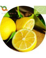 Limoni Biologici di Sicilia IGP. limoni non trattati buccia edibile