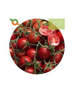 Pomodoro Ciliegino biologico prodotto in Sicilia