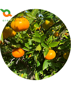 Clementine dell'Etna 1Kg