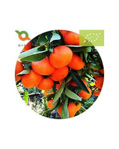 Mandarino senza semi Bio