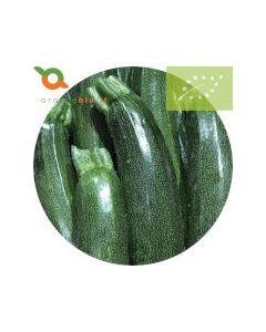 Zucchina verde biologica